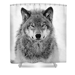 Monotone Timber Wolf  Shower Curtain