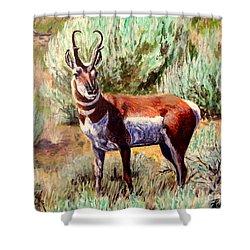 Montana Antelope Buck  Shower Curtain by Ruanna Sion Shadd a'Dann'l Yoder