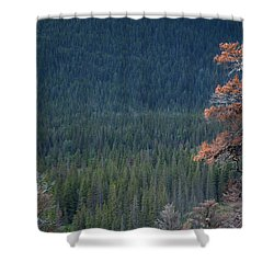 Montana Tree Line Shower Curtain