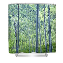 Montana Trees Shower Curtain