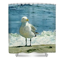 Montauk Gull Shower Curtain by Tom Hedderich