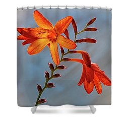 Montbretia 1 Shower Curtain