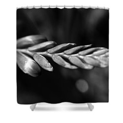 Montbretia  Shower Curtain