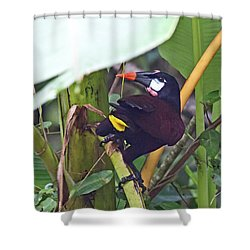 Shower Curtain featuring the photograph Montezuma Oropendola by John Haldane