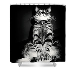Monty Our Precious Cat Shower Curtain by Jolanta Anna Karolska