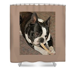 Monty The Boston Shower Curtain by Debbie Stahre