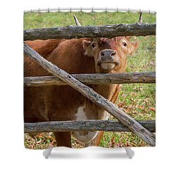 Shower Curtain featuring the photograph Moo by Bill Wakeley