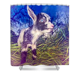 Shower Curtain featuring the photograph Moo Cow Love Grass by TC Morgan