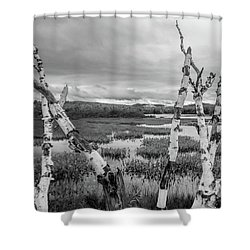 Moody Birch Shower Curtain