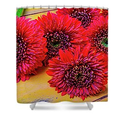 Moody Red Gerbera Dasies Shower Curtain by Garry Gay