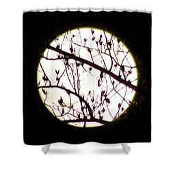 Moon Branches Shower Curtain