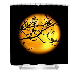 Moon In The Trees Shower Curtain