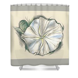 Shower Curtain featuring the drawing Moonflower Mixed Media Drawing by MM Anderson