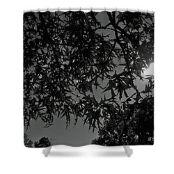 Shower Curtain featuring the photograph Moonlight by Betty Northcutt