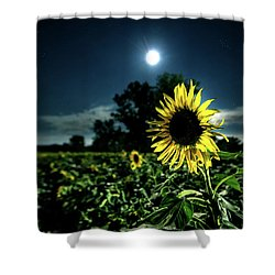 Shower Curtain featuring the photograph Moonlighting Sunflower by Everet Regal
