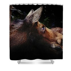 Moonlit Moose Shower Curtain
