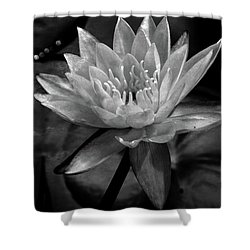 Moonlit Water Lily Bw Shower Curtain by Lesa Fine