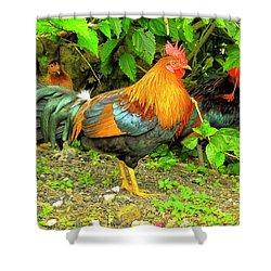Moorea Chicken Shower Curtain