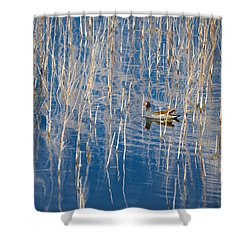 Moorhen In The Reeds Shower Curtain by Carolyn Marshall