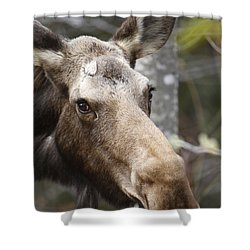 Moose - White Mountains New Hampshire Usa Shower Curtain by Erin Paul Donovan