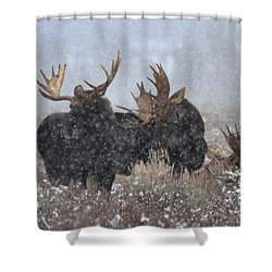 Shower Curtain featuring the photograph Moose Antlers In The Snow by Adam Jewell