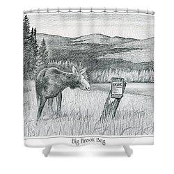 Moose At Big Brook Bog Shower Curtain