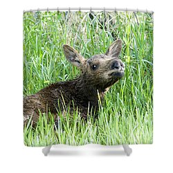 Moose Baby Shower Curtain