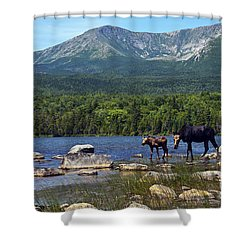 Moose Baxter State Park Maine 2 Shower Curtain