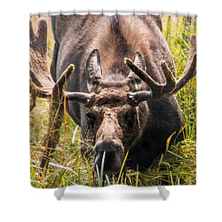 Shower Curtain featuring the photograph Moose by Cathy Donohoue