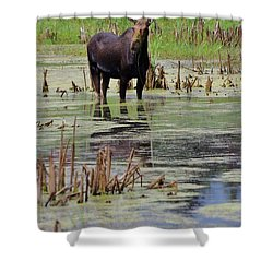 Moose Enjoying Dinner Shower Curtain