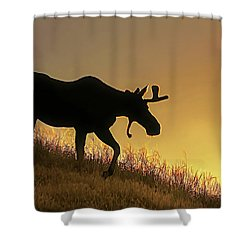 Shower Curtain featuring the photograph Moose Evening Wander by Jennie Marie Schell