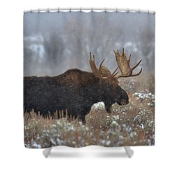 Shower Curtain featuring the photograph Moose In The Fog by Adam Jewell