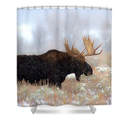 Shower Curtain featuring the photograph Moose In The Fog Silhouette by Adam Jewell