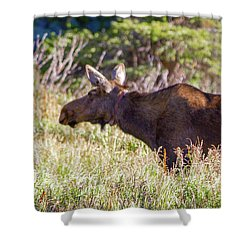 Moose In Waiting Shower Curtain