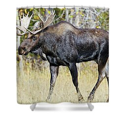 Moose On The Move Shower Curtain