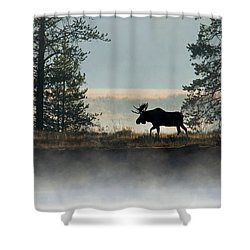 Moose Surprise Shower Curtain