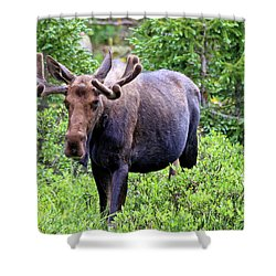 Shower Curtain featuring the photograph Moose Trail by Scott Mahon