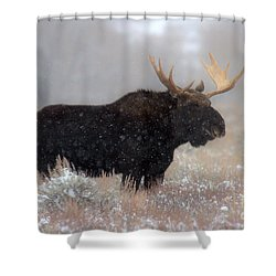 Shower Curtain featuring the photograph Moose Winter Silhouette by Adam Jewell