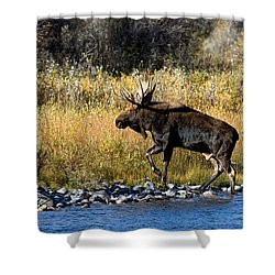 Moose X-ing Shower Curtain