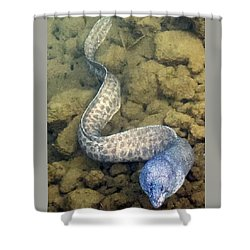 Shower Curtain featuring the photograph Moray Eel by Karen Nicholson