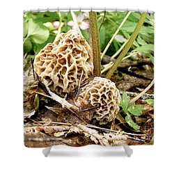 Morel Mushrooms Shower Curtain by Angie Rea