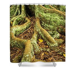 Shower Curtain featuring the photograph Moreton Bay Fig by Werner Padarin