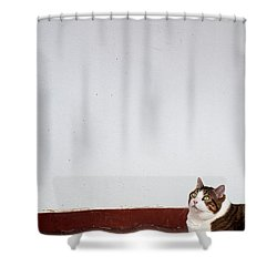 Shower Curtain featuring the photograph Morfeas by Laura Melis