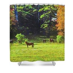 Morgan Horses In Autumn Pasture Shower Curtain