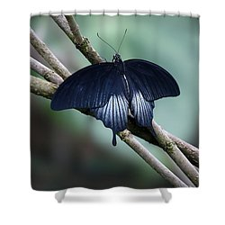 Great Mormon Butterfly Shower Curtain