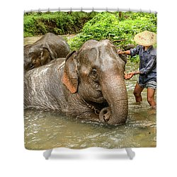 Morning Ablutions 4 Shower Curtain by Werner Padarin
