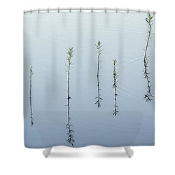 Morning Calm Shower Curtain