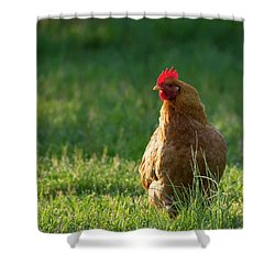 Morning Chicken Shower Curtain