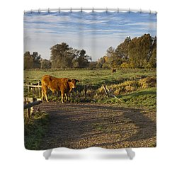 Morning Cow Shower Curtain