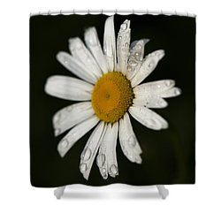 Morning Daisy Shower Curtain by Dan Hefle